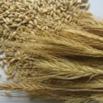 Oats and Barley